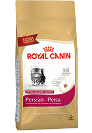 Kitten Persian